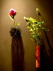 2013年5月の花02