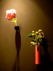 2014年6月の花02