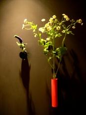 2014年3月の花02
