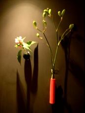 2014年9月の花