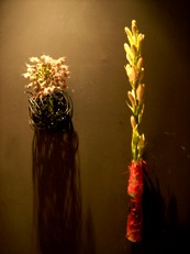 2013年9月の花01