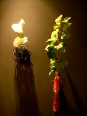 2013年9月の花02