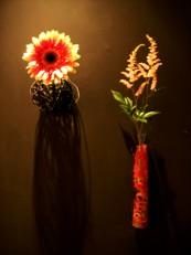 2013年4月の花01