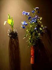 2013年4月の花02
