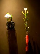 2013年6月の花01